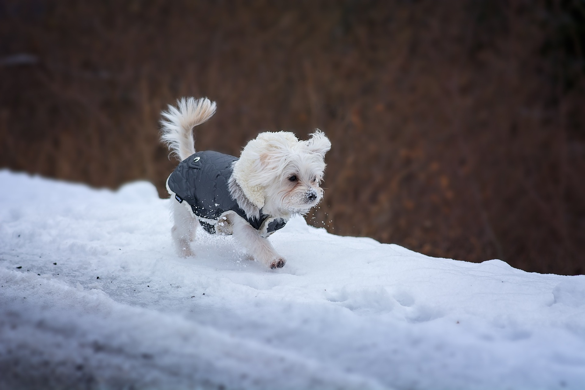 TurfMutt's Winter-Wise Weather Tips for Pets